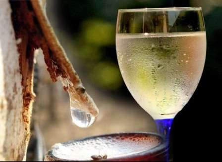 Як закривати березовий сік - рецепти приготування квасу, вина