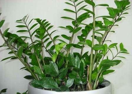 Органічні добрива для кімнатних квітів