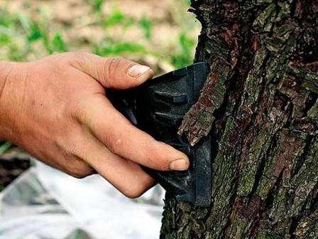 Як білити старі дерева