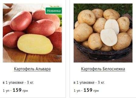 Посівний календар посадки картоплі