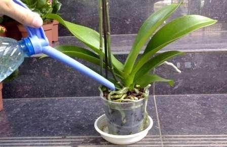 Яку воду використовувати для поливу орхідеї