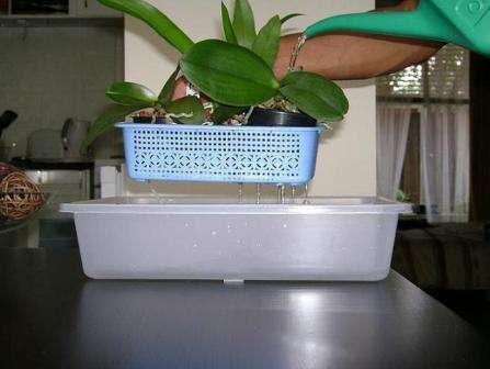 Відео: Полив орхідей в домашніх умовах