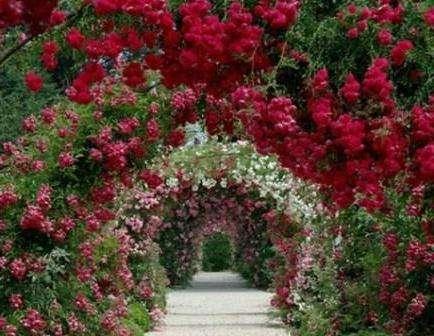 Багаторічні квіти для клумби: Фото, назва.