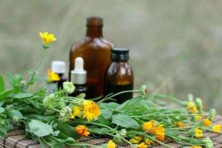 Цілющі властивості масла календули та протипоказання до застосування