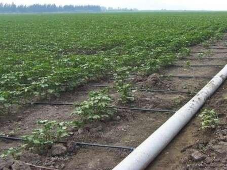 Крапельне зрошення картоплі