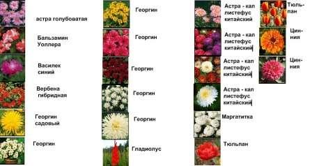 Види квітів для клумби
