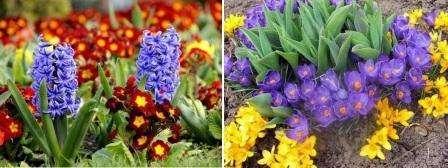Квіти які цвітуть все літо