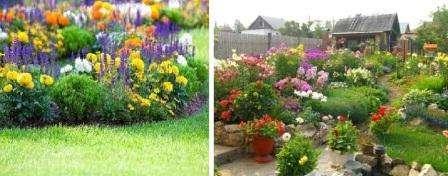 квіти що цвітуть ціле літо