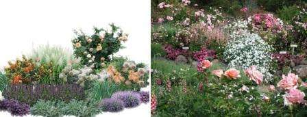 які квіти цвітуть ціле літо фото