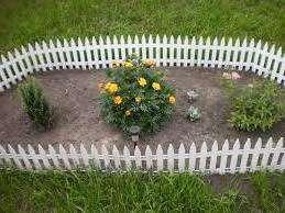 Коли садити чорнобривці