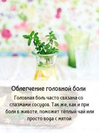 Лікарська рослина м'ята.