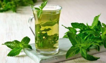 Лікарська рослина м'ята - лікувальні властивості та користь.Фото.