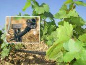 Крапельний, надземний і підземний полив винограду навесні