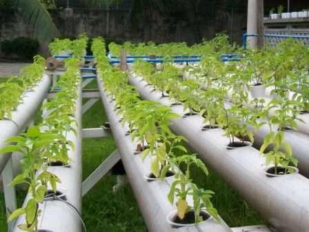 Вирощування огірків і томатів методом гідропоніки: список переваг