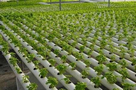 Гідропоніка вирощування огірків та помідор