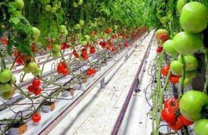 Гідропоніка своїми руками для огірків і томатів: Опис методу.