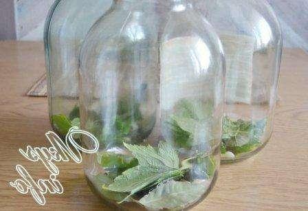 Рецепт квашених огірків на 3 літрову банку