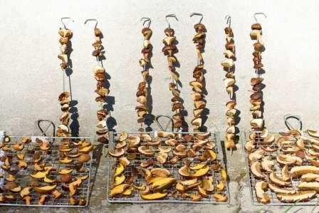 Сушка грибів на зиму