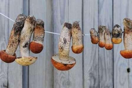 Інші способи зберігання сушених грибів на зиму