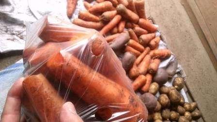 Як зберігати моркву на балконі в ящику