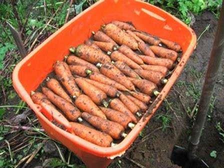 Як продовжити термін зберігання овочів?