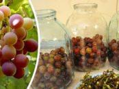 Як зробити компот з винограду на зиму рецепт без стерилизации