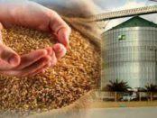 Способи зберігання зерна в мішках та елеваторі