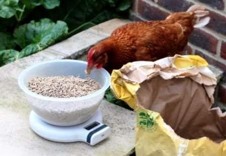 Що робити щоб кури краще неслися