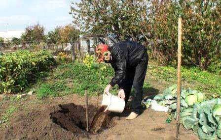 Як правильно пересадити виноград восени