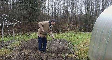 Перед посадкою моркви в землю необхідно внести поживну суміш з перегною, суперфосфату і калійної солі