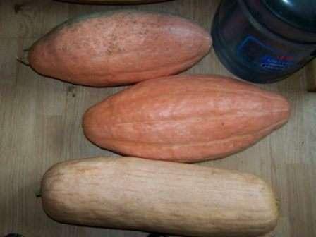 Гарбуз Пінк Банана - середньостиглий сорт