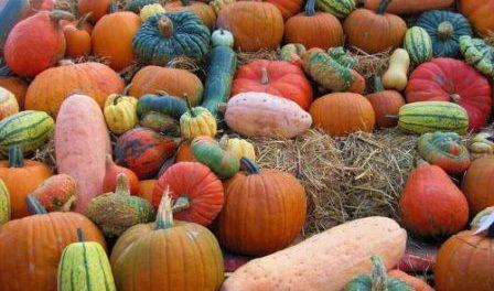 Урожай гарбуза: умови зберігання на зиму в льоху,погребі,подвалі