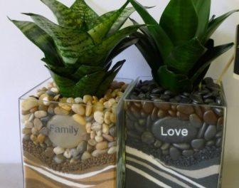 Сансевієрія (Щучий Хвіст) - догляд в домашніх умовах,вазон з фото