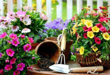 З багаторічників можна створювати оригінальні квіткові композиції