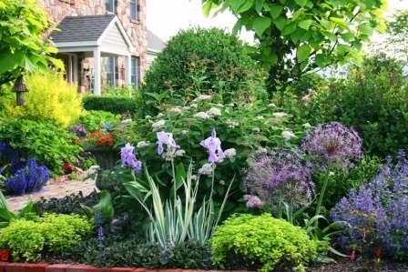 Поєднання різних видів садових квітів прикрасить дачну ділянку.