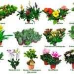 Каталог кімнатних рослин з фотографіями