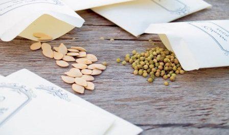 Підготовка насіння до сівби: Як підготувати насіння до посіву