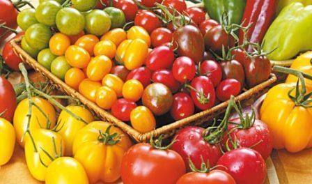 Безрозсадний спосіб вирощування помідорів, як вирощувати у відкритому грунті