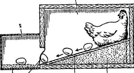 Гнёздо для курей, щоб не клювали яйця
