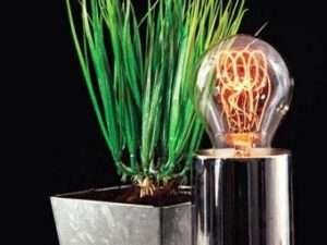 Освітлення для розсади в домашніх умовах: оптимальне світло, як обрати правильно лампу