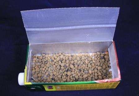 Як вирощувати сальвії? Сальвія - насіння