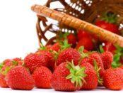 Чим підгодувати і обробити полуницю навесні від хвороб та шкідників