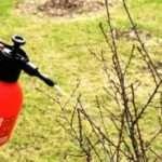 Чим обробити дерева і кущі в саду навесні?