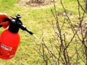 Обробка дерев та кущів в саду весною: ефективні препарати, народні засоби