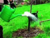 підживлення плодових дерев