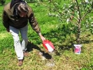 підживлення плодових дерев весною