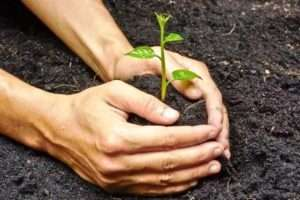 удобрення ґрунту навесні