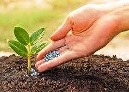 Які вносити добрива для городу навесні - органічні та мінеральні