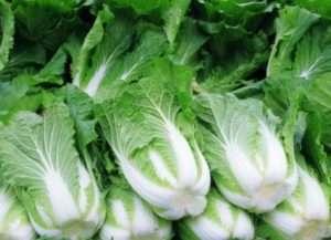 Догляд за пекінською капустою