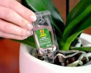 Підгодівля орхідей в домашніх умовах